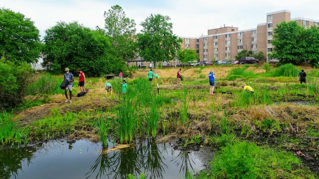 Students working in a lush drainage basin with ponds in front of apartment building