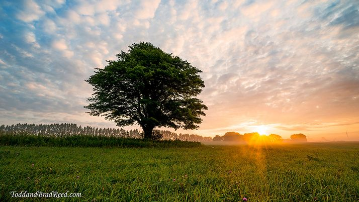 Photo of landscape with tree and sunset by Todd and Brad Reed.