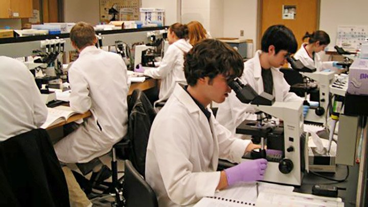 Two rows of students in lab coats use microscopes in a labratory.