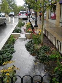 Relative Success of Native Plants in Urban Curb-cut Rain Gardens