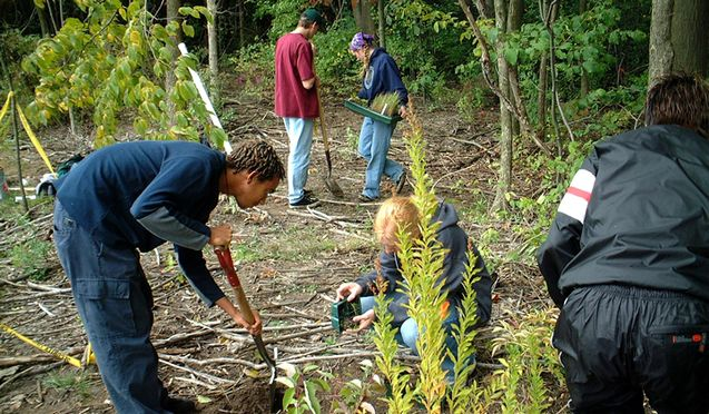Color photo of various people digging and gardening in forest plot
