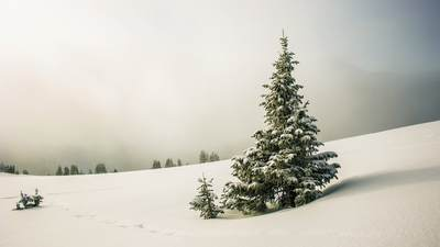 A snow-covered pine tree stands tall among a landscape of snow.