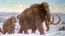 Biology Seminar: Weaning in Woolly Mammoths and what it can tell us about their extinction
