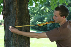 In 2011, Owen Selles gathers data for tree map