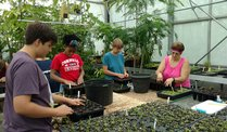 Greenhouse volunteer day - CANCELED