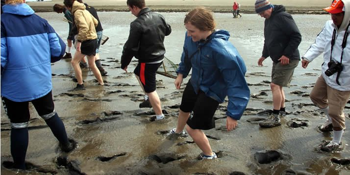 A geography professor writes about walking the mudflats of the Wadden Sea during last spring's Semester in the Netherlands.