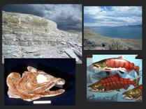Biology Seminar: The History of Salmons, Trout and Char in Western North America During the Past 20 Million Years