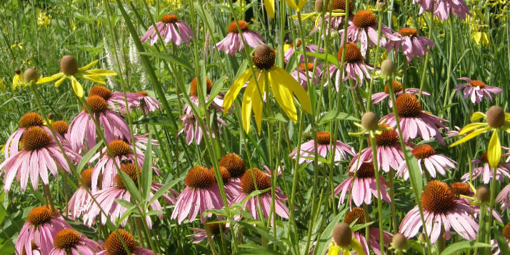 The annual Native Plant Sale will feature a wide array of native plants, shrubs and grasses.