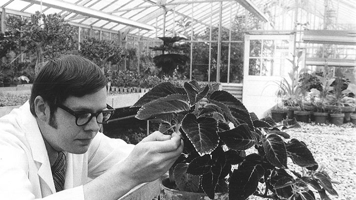 A man in a lab coat is in a greenhouse looking intently at a plant at eye level.