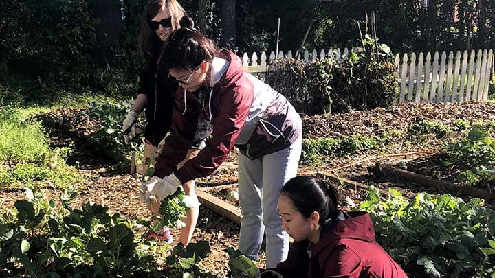 Service Learning Volunteers planting gardens
